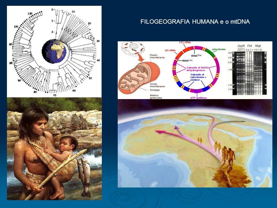 FILOGEOGRAFIA HUMANA e o mtDNA