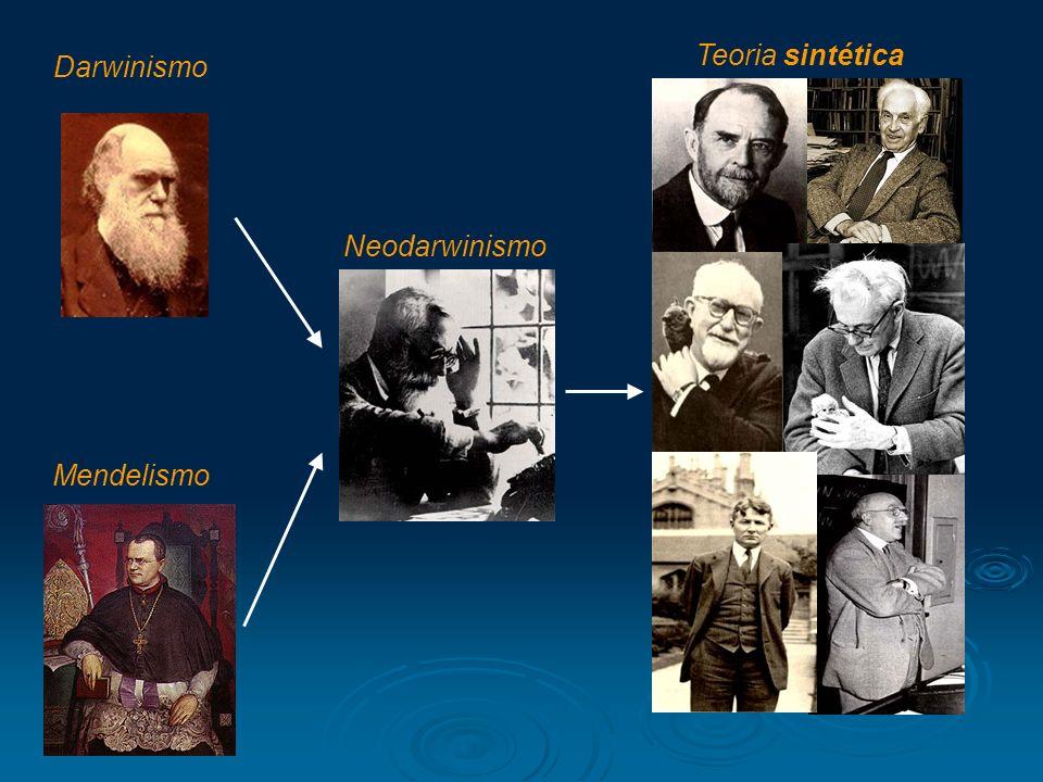 Darwinismo Neodarwinismo Teoria sintética Mendelismo