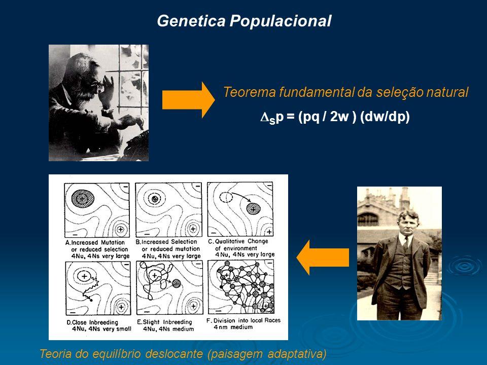 S p = (pq / 2w ) (dw/dp) Teoria do equilíbrio deslocante (paisagem adaptativa) Teorema fundamental da seleção natural Genetica Populacional