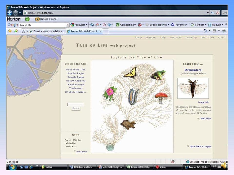 Dinosauros, Aves e Classificação Filogenética