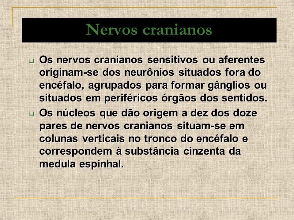 Nervos cranianos Os nervos cranianos sensitivos ou aferentes originam-se dos neurônios situados fora do encéfalo, agrupados para formar gânglios ou si