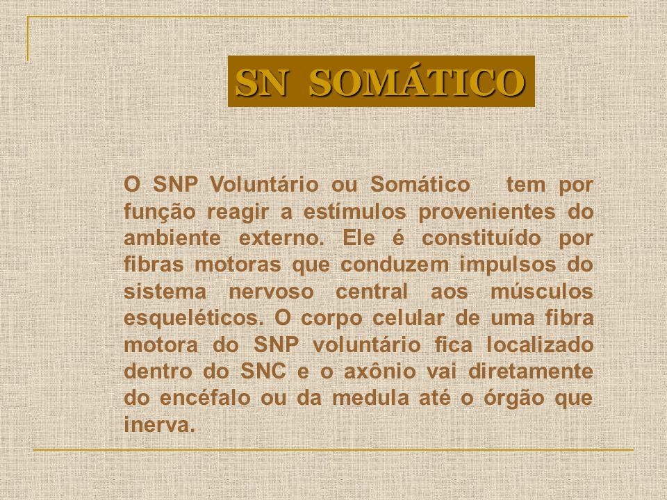 O SNP Voluntário ou Somático tem por função reagir a estímulos provenientes do ambiente externo. Ele é constituído por fibras motoras que conduzem imp