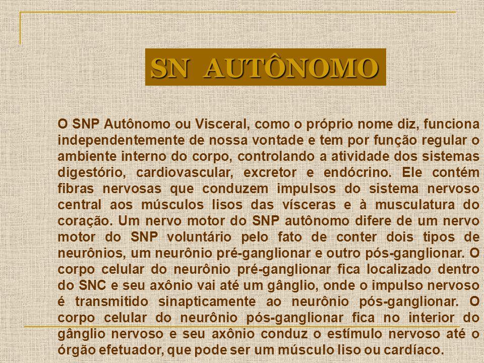 O SNP Autônomo ou Visceral, como o próprio nome diz, funciona independentemente de nossa vontade e tem por função regular o ambiente interno do corpo,