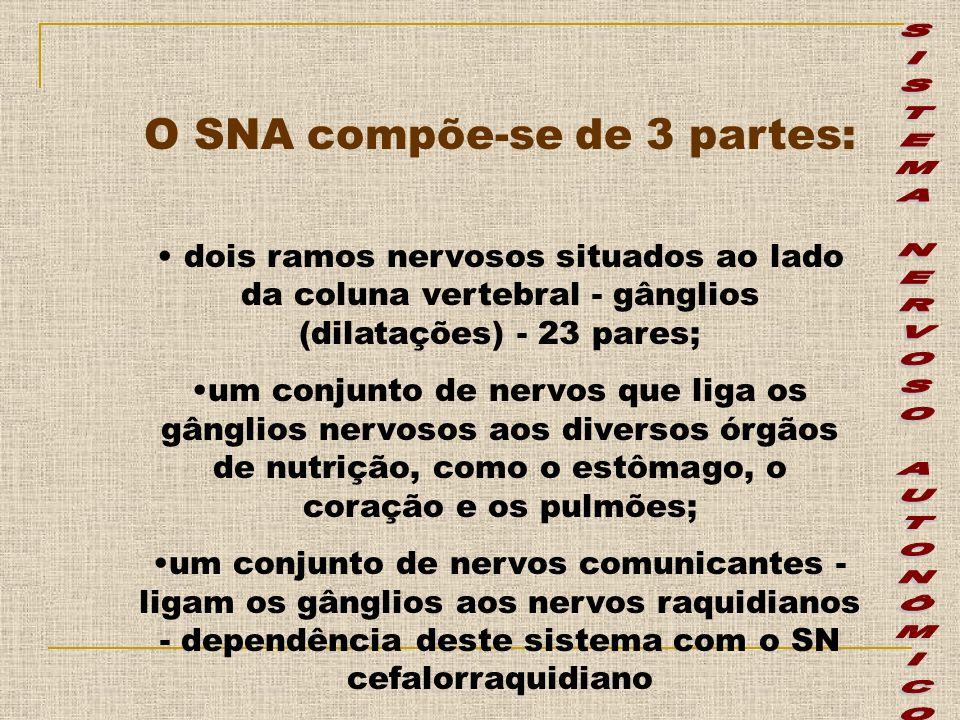 O SNA compõe-se de 3 partes: dois ramos nervosos situados ao lado da coluna vertebral - gânglios (dilatações) - 23 pares; um conjunto de nervos que li