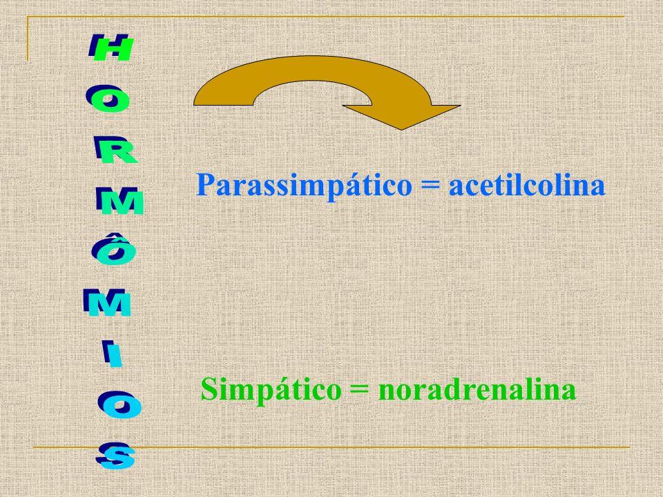 Parassimpático = acetilcolina Simpático = noradrenalina