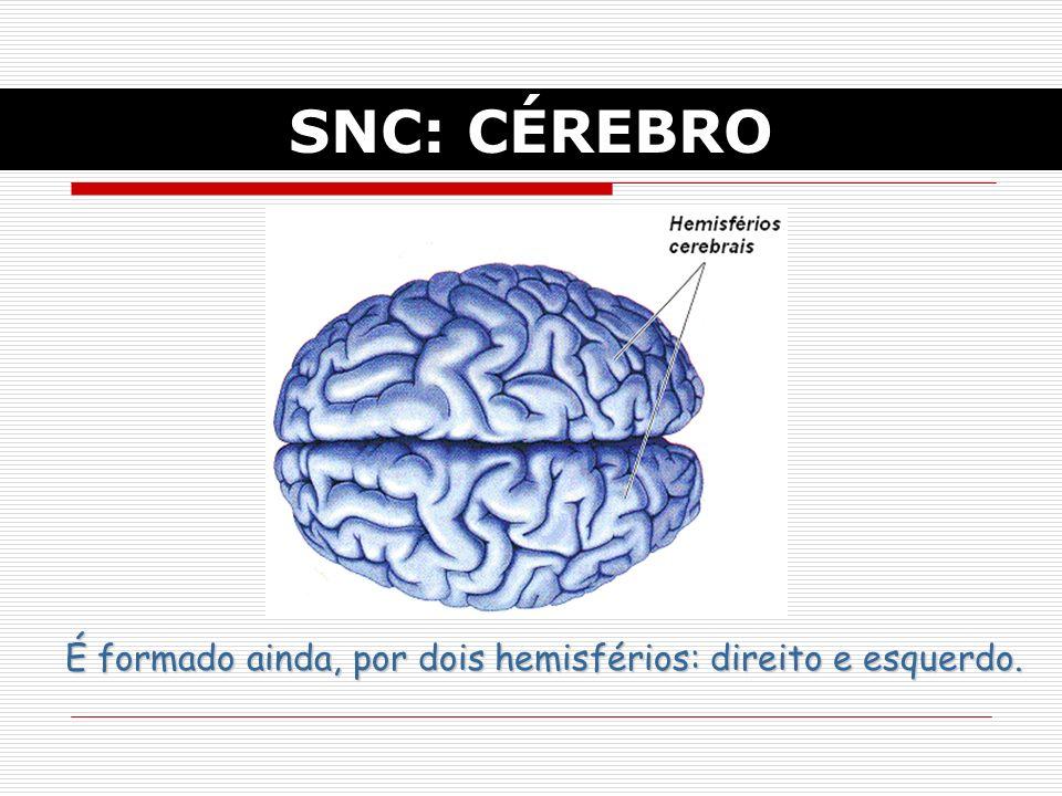 SNC: CÉREBRO É formado ainda, por dois hemisférios: direito e esquerdo.