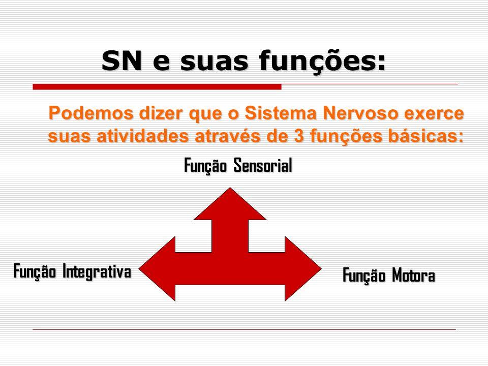 Podemos dizer que o Sistema Nervoso exerce suas atividades através de 3 funções básicas: Função Sensorial Função Sensorial Função Integrativa Função Motora SN e suas funções:
