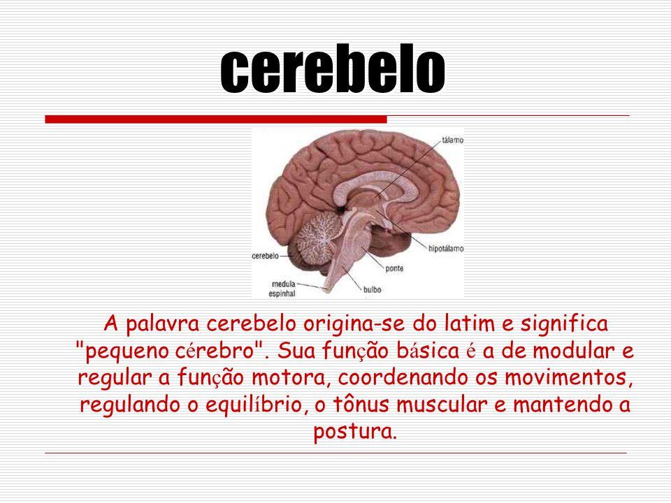 A palavra cerebelo origina-se do latim e significa pequeno c é rebro .