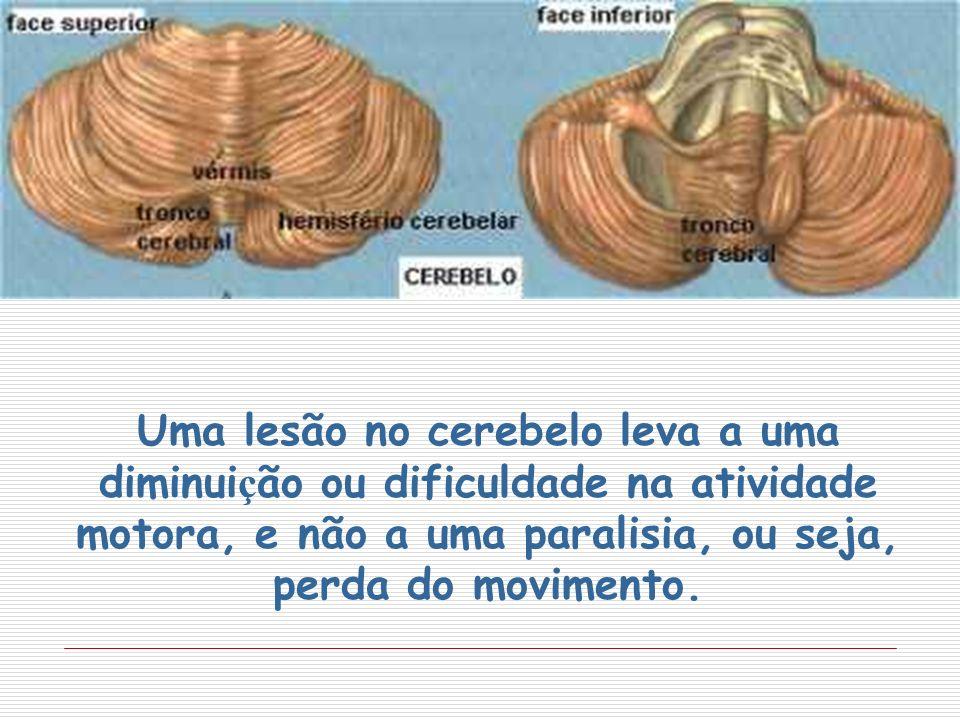 Uma lesão no cerebelo leva a uma diminui ç ão ou dificuldade na atividade motora, e não a uma paralisia, ou seja, perda do movimento.