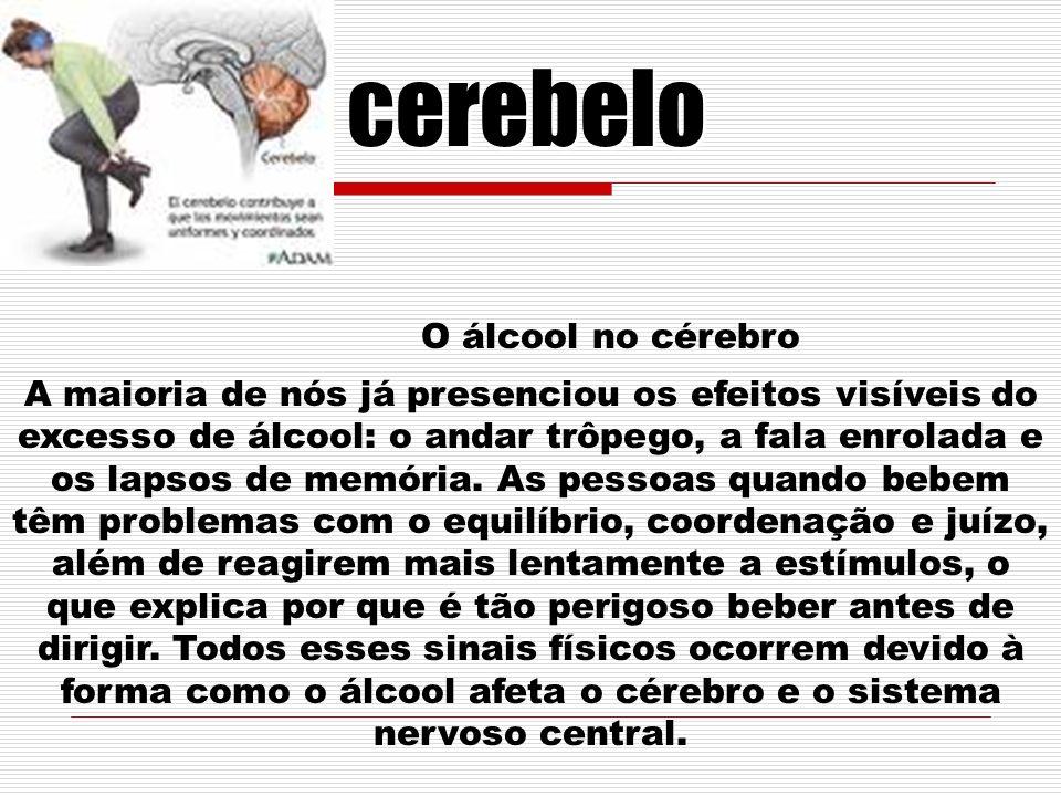 cerebelo O álcool no cérebro A maioria de nós já presenciou os efeitos visíveis do excesso de álcool: o andar trôpego, a fala enrolada e os lapsos de memória.
