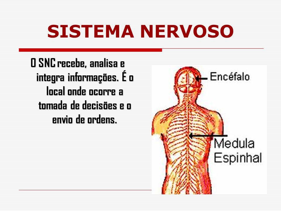 O SNC recebe, analisa e integra informações.