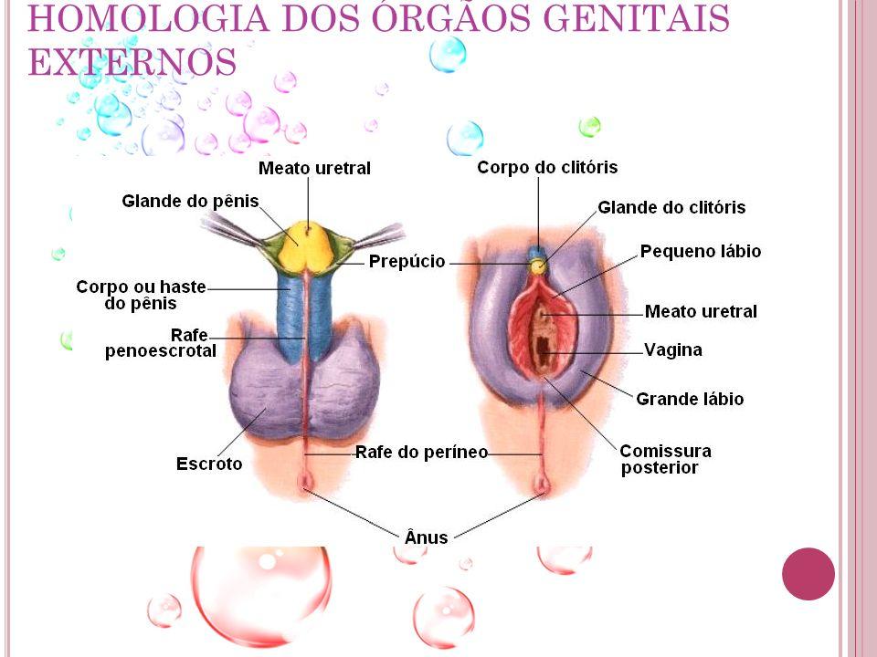 P ROGESTERONA Relacionada com a preparação do útero para a aceitação do embrião.