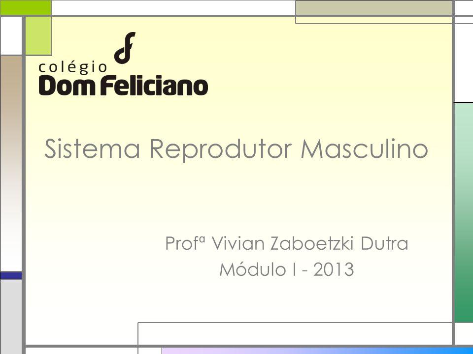 Sistema Reprodutor Masculino Profª Vivian Zaboetzki Dutra Módulo I - 2013