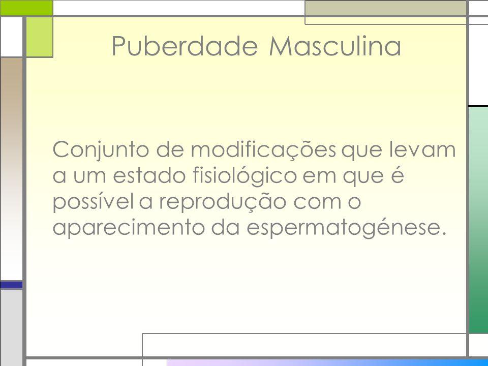 Puberdade Masculina Conjunto de modificações que levam a um estado fisiológico em que é possível a reprodução com o aparecimento da espermatogénese.