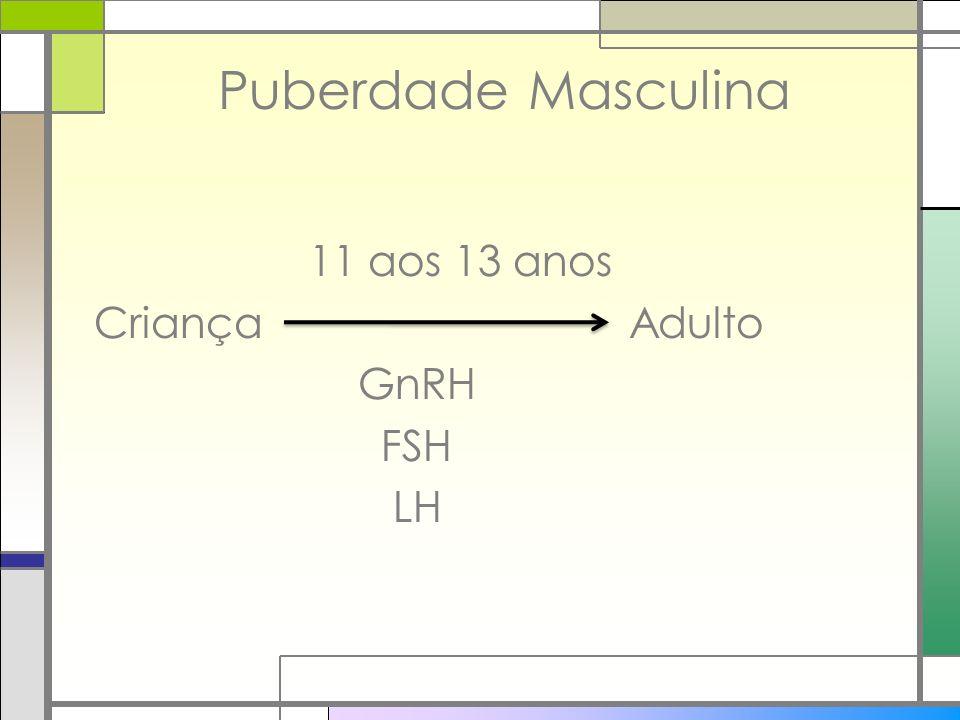 Puberdade Masculina 11 aos 13 anos Criança Adulto GnRH FSH LH