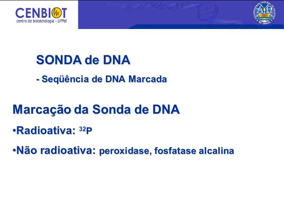Marcação da Sonda de DNA Radioativa: 32 PRadioativa: 32 P Não radioativa: peroxidase, fosfatase alcalinaNão radioativa: peroxidase, fosfatase alcalina SONDA de DNA - Seqüência de DNA Marcada