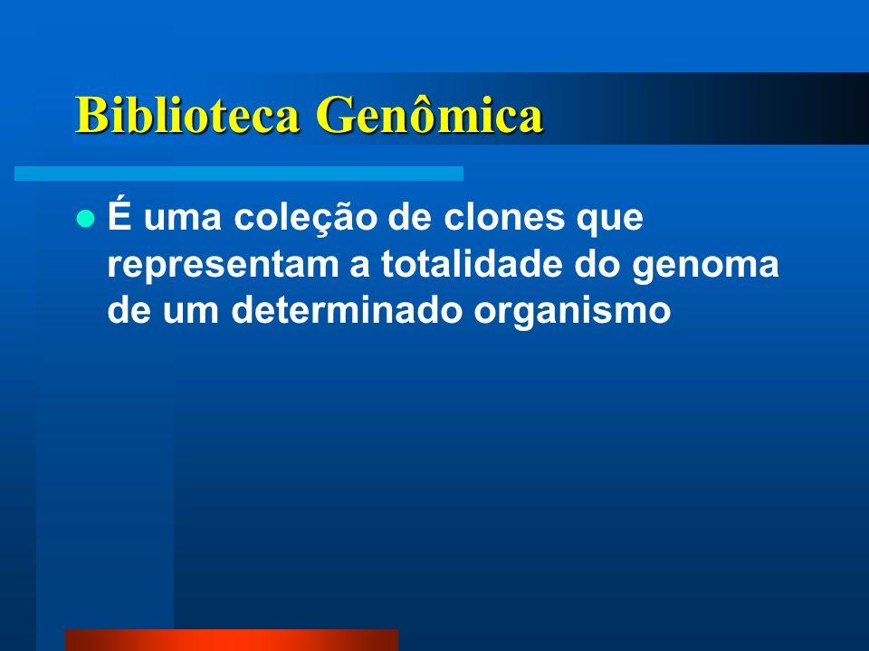 Biblioteca Genômica É uma coleção de clones que representam a totalidade do genoma de um determinado organismo