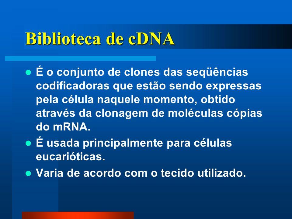 Biblioteca de cDNA É o conjunto de clones das seqüências codificadoras que estão sendo expressas pela célula naquele momento, obtido através da clonagem de moléculas cópias do mRNA.