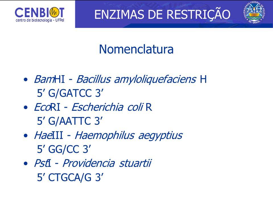 BamHI - Bacillus amyloliquefaciens H 5 G/GATCC 3 EcoRI - Escherichia coli R 5 G/AATTC 3 HaeIII - Haemophilus aegyptius 5 GG/CC 3 PstI - Providencia st