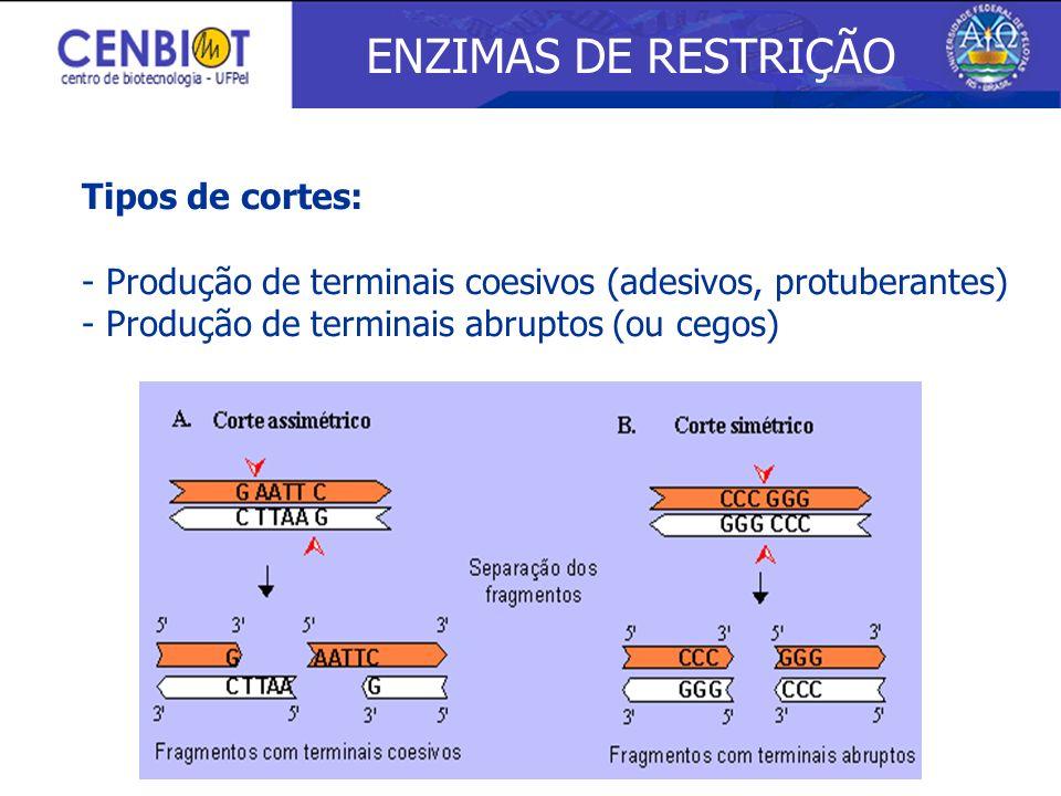 ENZIMAS DE RESTRIÇÃO Tipos de cortes: - Produção de terminais coesivos (adesivos, protuberantes) - Produção de terminais abruptos (ou cegos)