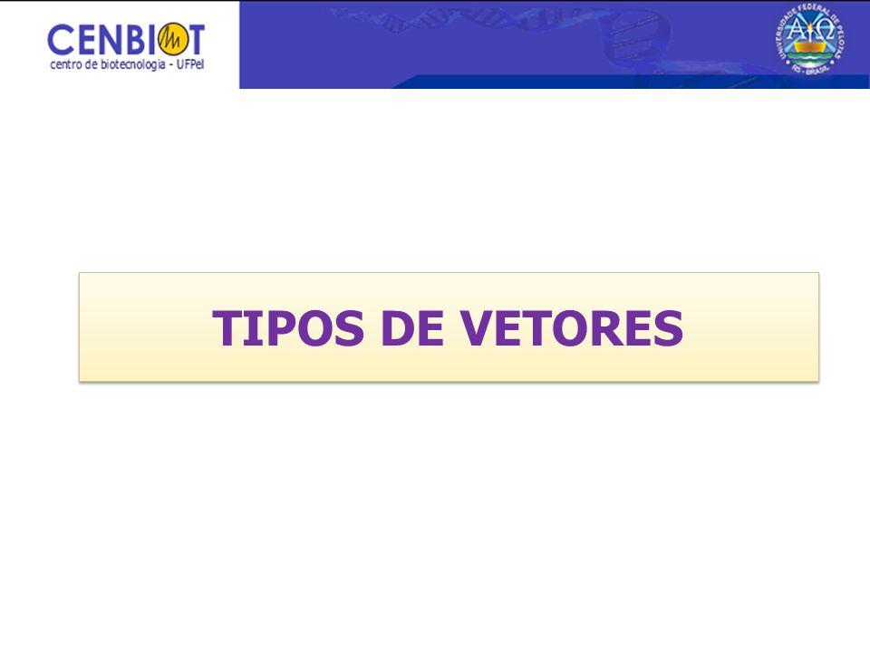 TIPOS DE VETORES