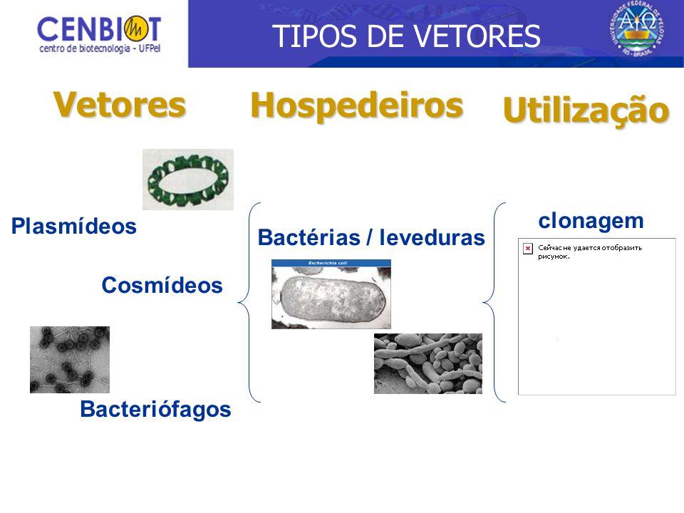 Vetores Hospedeiros Plasmídeos Cosmídeos Bactérias / leveduras clonagem Bacteriófagos Utilização