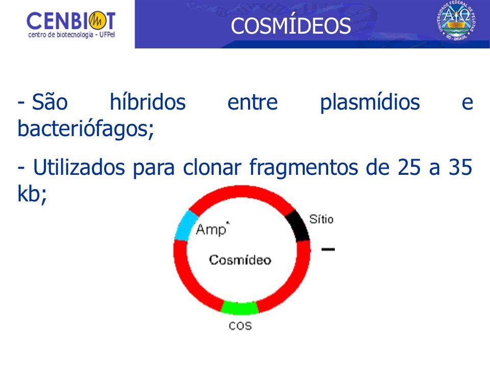 - São híbridos entre plasmídios e bacteriófagos; - Utilizados para clonar fragmentos de 25 a 35 kb; COSMÍDEOS