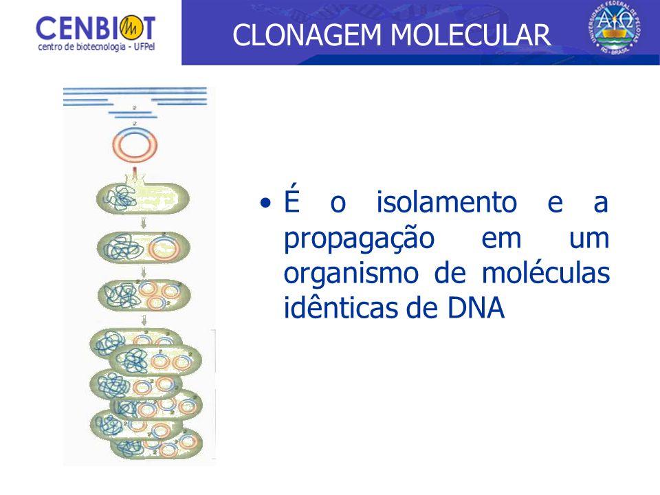 É o isolamento e a propagação em um organismo de moléculas idênticas de DNA CLONAGEM MOLECULAR