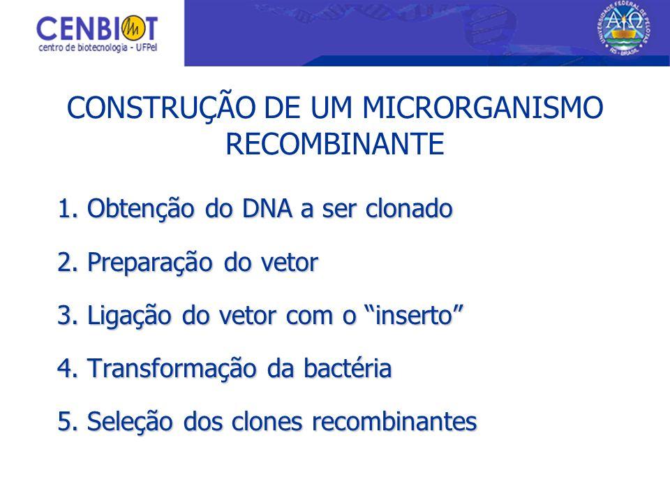 CONSTRUÇÃO DE UM MICRORGANISMO RECOMBINANTE 1. Obtenção do DNA a ser clonado 2. Preparação do vetor 3. Ligação do vetor com o inserto 4. Transformação