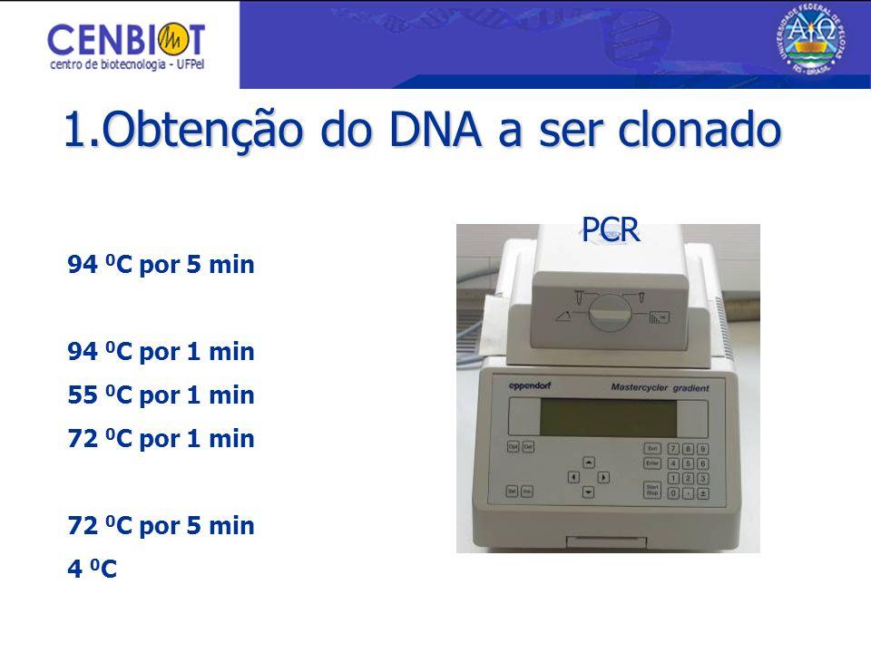 94 0 C por 5 min 94 0 C por 1 min 55 0 C por 1 min 72 0 C por 1 min 72 0 C por 5 min 4 0 C 35 ciclos PCR