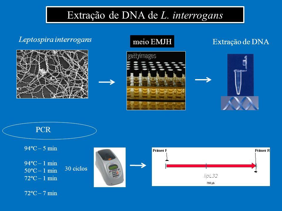 Extração de DNA de L. interrogans Leptospira interrogans meio EMJHExtração de DNA PCR 94ºC – 5 min 94ºC – 1 min 50ºC – 1 min 72ºC – 1 min 72ºC – 7 min
