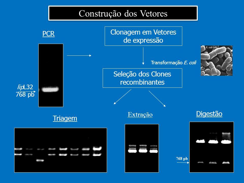 PCR Clonagem em Vetores de expressão Transformação E. coli Seleção dos Clones recombinantes 768 pb Triagem Digestão Construção dos Vetores lipL32 768