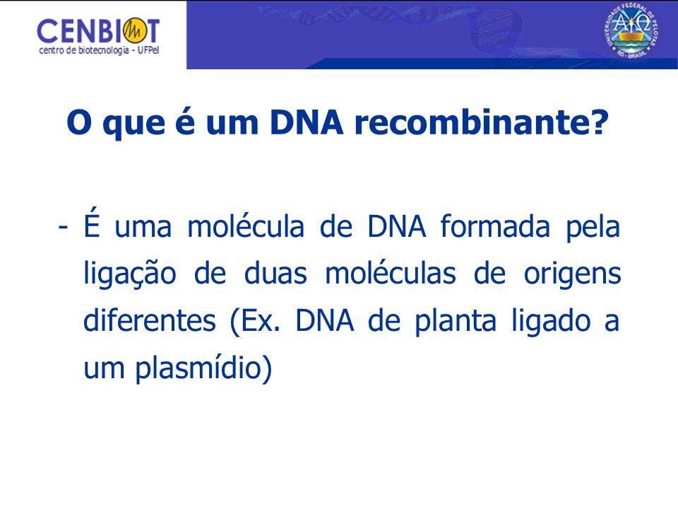 O que é um DNA recombinante? - É uma molécula de DNA formada pela ligação de duas moléculas de origens diferentes (Ex. DNA de planta ligado a um plasm