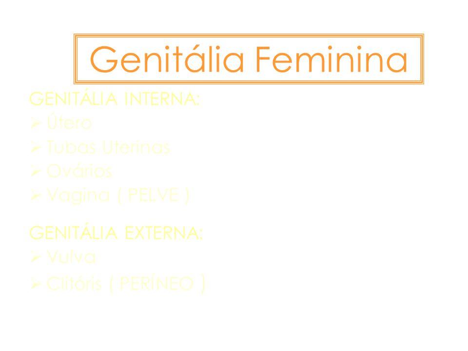 Genitália Feminina GENITÁLIA INTERNA: Útero Tubas Uterinas Ovários Vagina ( PELVE ) GENITÁLIA EXTERNA: Vulva Clitóris ( PERÍNEO )