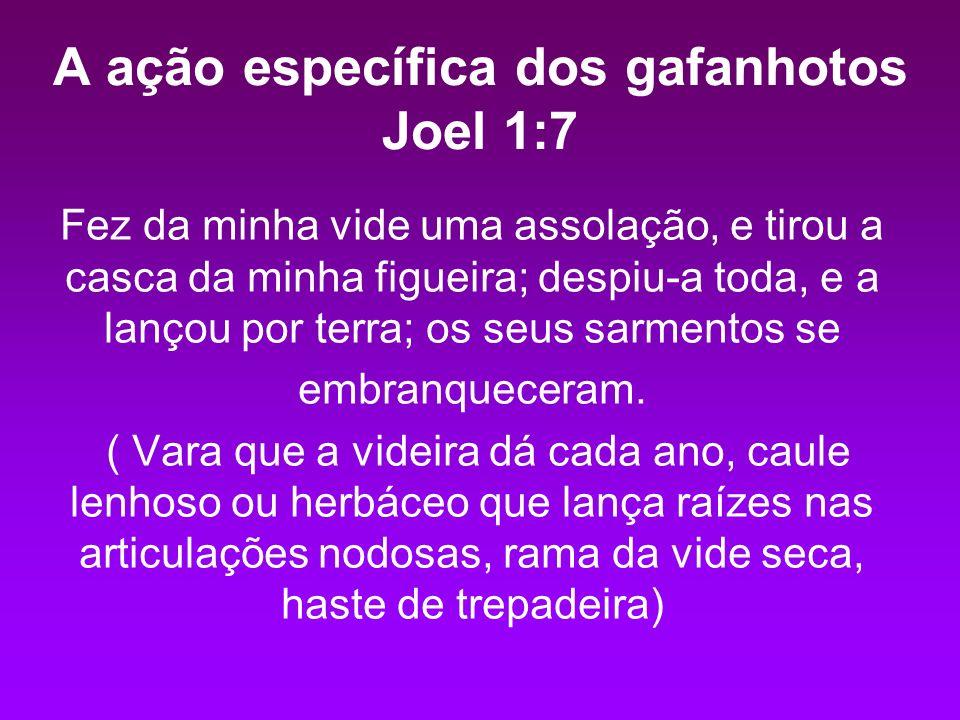 A ação específica dos gafanhotos Joel 1:7 Fez da minha vide uma assolação, e tirou a casca da minha figueira; despiu-a toda, e a lançou por terra; os seus sarmentos se embranqueceram.