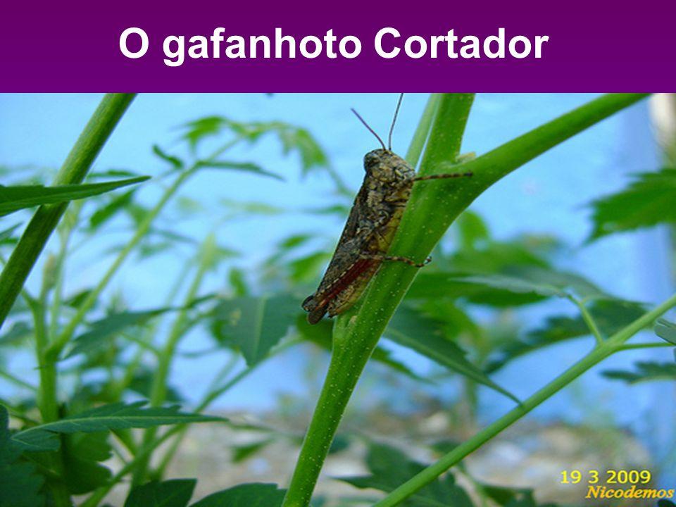 O gafanhoto Cortador