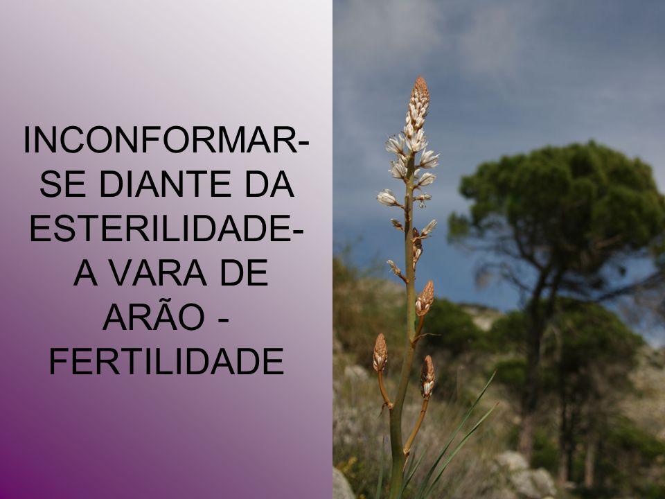 INCONFORMAR- SE DIANTE DA ESTERILIDADE- A VARA DE ARÃO - FERTILIDADE