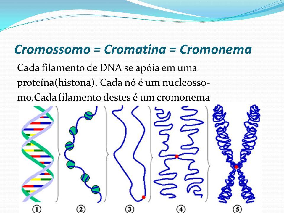 Cromossomo = Cromatina = Cromonema Cada filamento de DNA se apóia em uma proteína(histona). Cada nó é um nucleosso- mo.Cada filamento destes é um crom