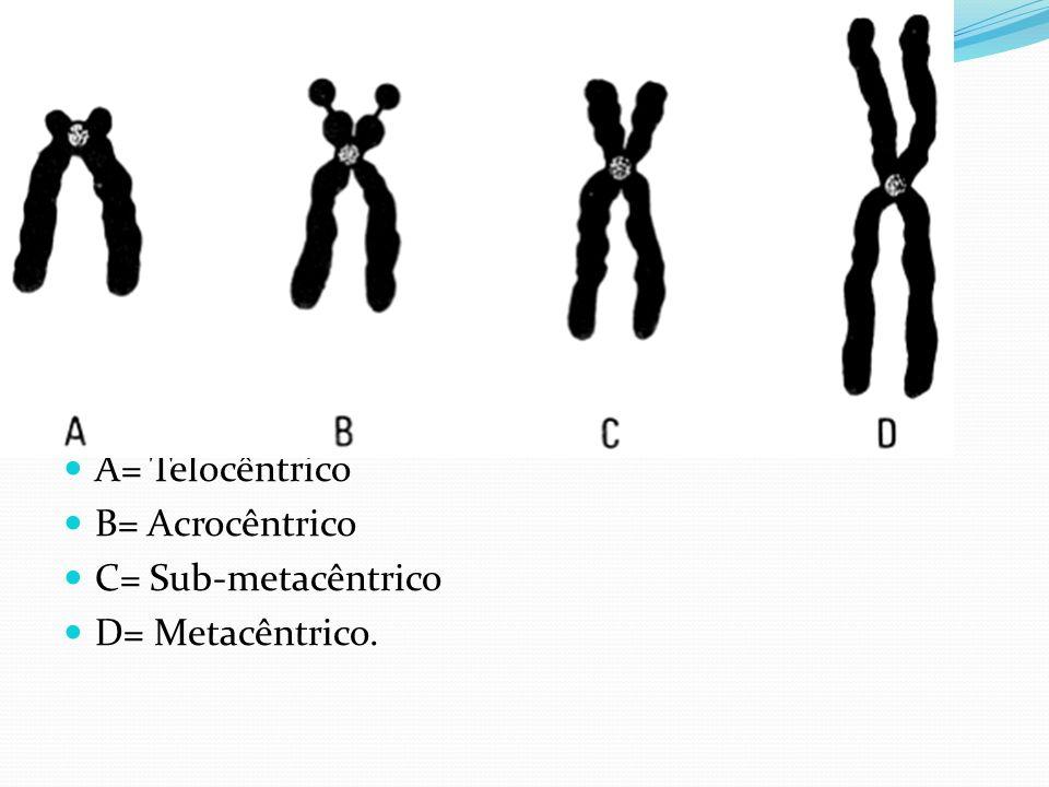 Classificação dos Cromossomos A= Telocêntrico B= Acrocêntrico C= Sub-metacêntrico D= Metacêntrico.