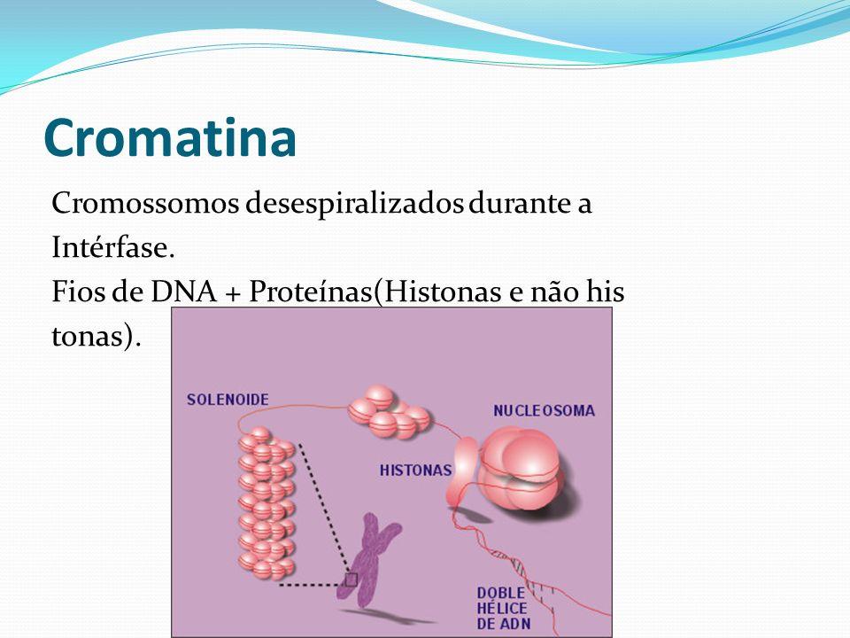Cromatina Cromossomos desespiralizados durante a Intérfase. Fios de DNA + Proteínas(Histonas e não his tonas).