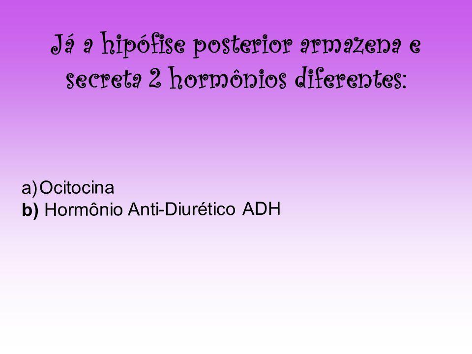 Já a hipófise posterior armazena e secreta 2 hormônios diferentes: a)Ocitocina b) Hormônio Anti-Diurético ADH