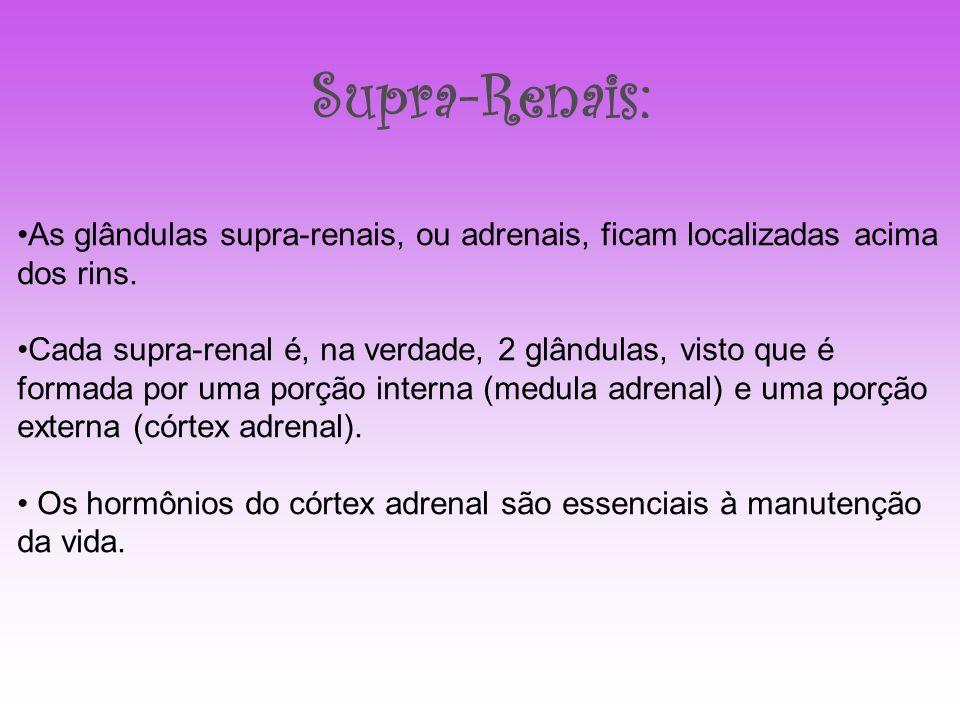 Supra-Renais: As glândulas supra-renais, ou adrenais, ficam localizadas acima dos rins. Cada supra-renal é, na verdade, 2 glândulas, visto que é forma