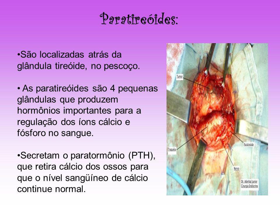Paratireóides: São localizadas atrás da glândula tireóide, no pescoço. As paratireóides são 4 pequenas glândulas que produzem hormônios importantes pa