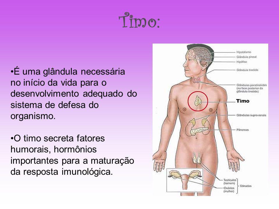 Timo: É uma glândula necessária no início da vida para o desenvolvimento adequado do sistema de defesa do organismo. O timo secreta fatores humorais,