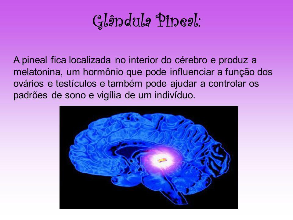 Glândula Pineal: A pineal fica localizada no interior do cérebro e produz a melatonina, um hormônio que pode influenciar a função dos ovários e testíc