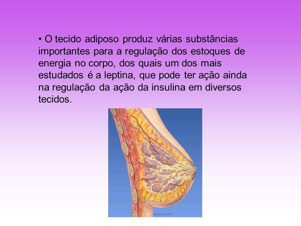 O tecido adiposo produz várias substâncias importantes para a regulação dos estoques de energia no corpo, dos quais um dos mais estudados é a leptina,