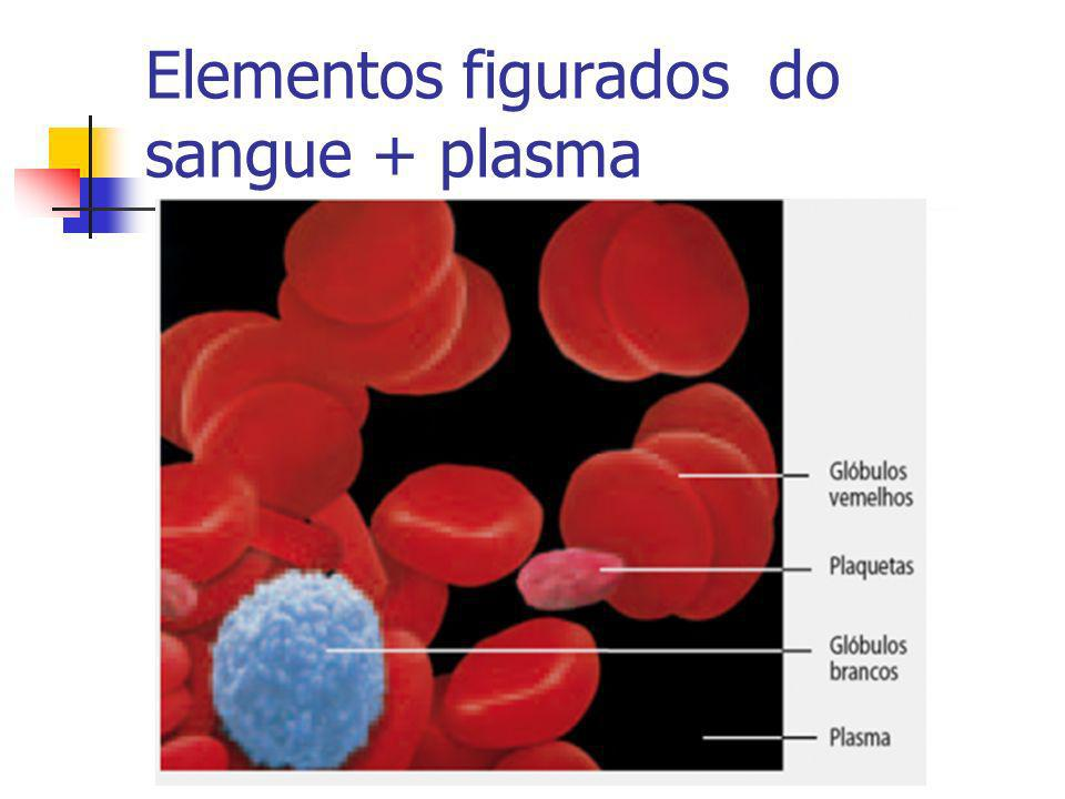Elementos figurados do sangue + plasma