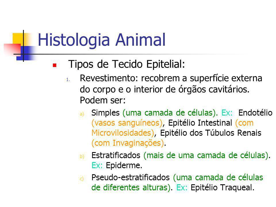 Histologia Animal Tipos de Tecido Conjuntivo: 3.