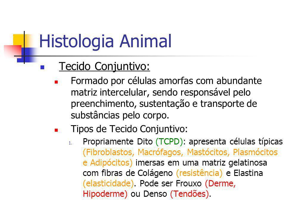 Foto à Esquerda: Tecido Conjuntivo Frouxo. Foto à Direita: Tecido Conjuntivo Denso.