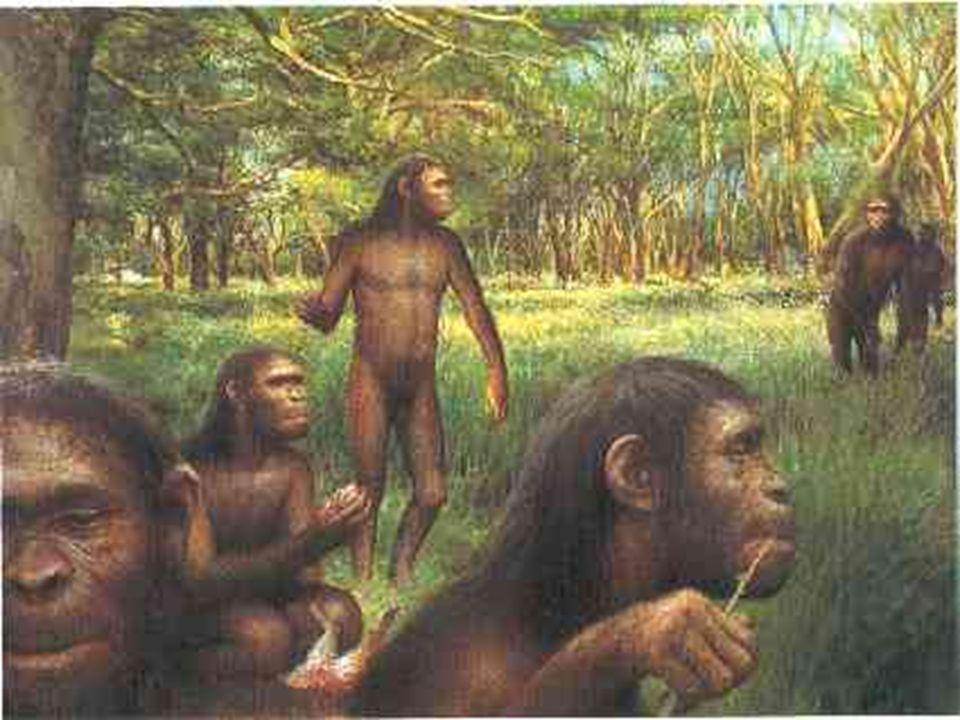 Homo Habilis(homem habilidoso)é considerado o primeiro representante do gênero homo inventou as primeiras ferramentas de pedra e madeira e viveu há aproximadamente 2 milhões de anos.